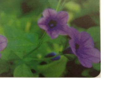 pad buro bu-m20012 flowers